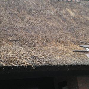 Wanneperveen-rieten-dak-vernieuwen