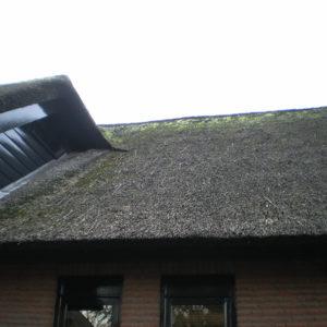 Genemuiden onderhoud rieten dak
